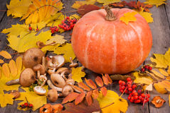 Pumpkin, mushrooms, rowanberry and maple leaves on old wooden ta Royalty Free Stock Photo
