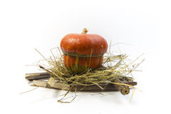 Pumpkin. In nest and brushwood Royalty Free Stock Photos