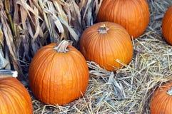 Pumpkin. Royalty Free Stock Image