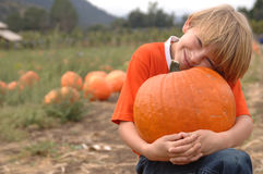 Pumpkin Niko2 Stock Photography