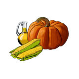 A pumpkin, oil and and corns. Lying together on a white background Stock Photo