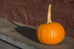Pumpkin on old wooden bench stock photos