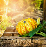 Pumpkin on old wooden box in sunshine Stock Images