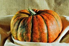 Pumpkin. One orange green pumpkin close-up Royalty Free Stock Image