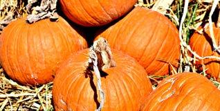 Pumpkin, Orange, Large On Display At TLC Garden Center. In Oklahoma City,
