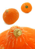 Pumpkin orange. Photographed from different angles, white background Stock Photography