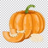 Pumpkin , organic food, farm food. Stock Photography