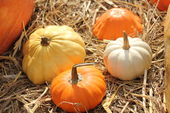 Pumpkin and Organic vegetables. Royalty Free Stock Photography