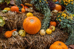 Pumpkin ornament at autumn Stock Photos