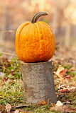 Pumpkin outdoor Royalty Free Stock Photography