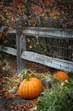 Pumpkin Outside of Fence at Gaden Growing Royalty Free Stock Images