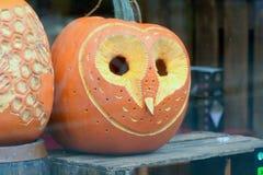 Pumpkin owl face Royalty Free Stock Photos