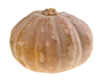 Pumpkin on packground Stock Image