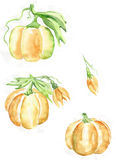 Pumpkin painted in watercolor on paper Stock Photos
