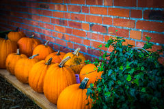 Pumpkin paradise Royalty Free Stock Photography
