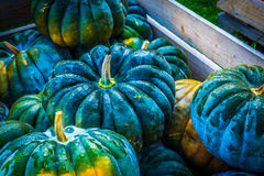 Pumpkin paradise Royalty Free Stock Image