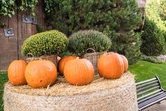 Pumpkin in the park stock photos
