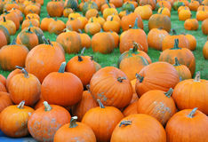Free Pumpkin Patch Stock Photography - 11198342