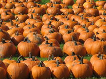 Free Pumpkin Patch Royalty Free Stock Image - 11258766