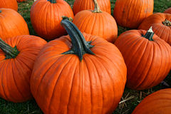 Free Pumpkin Patch Stock Photography - 11454202