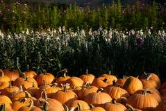 Free Pumpkin Patch Stock Image - 1276991