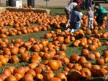 Pumpkin patch. Child at pumpkin patch with family Royalty Free Stock Images