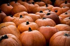 Pumpkin Patch. A high contrast pumpkin patch royalty free stock image