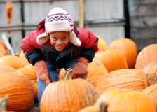 Pumpkin Patch. Boy posing with many pumpkins Stock Images