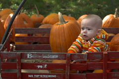 Pumpkin Patch Stock Photos