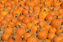 Pumpkin Patch_2. A pumpkin patch Stock Images