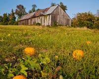 Pumpkin Patch. In Calvert Maryland Stock Photos