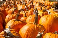 Pumpkin Patch. In Half Moon Bay, CA Stock Photos