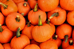 Pumpkin Patch. Bright orange pumpkins are piled high as if just harvested from the field Stock Image