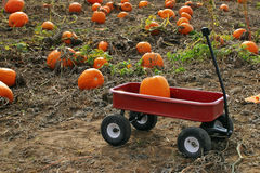 Pumpkin patch. Pumpkin sitting in wagon at a pumpkin patch Royalty Free Stock Image