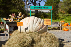 Pumpkin Patch. At the annual Berkshire Botanical Garden Harvest Festival.  This is this non-profit's largest fundraiser, held each October in Stckbridge Royalty Free Stock Photos