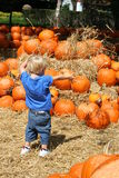 Pumpkin Patch. Young boy throwing hay in pumpkin patch. It is harvest time and Halloween is approaching Royalty Free Stock Photography
