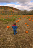 Pumpkin Patch. Little girl searches for a pumpkin Royalty Free Stock Photo
