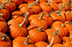 Pumpkin Patch. Halloween pumpkins lined up for sale royalty free stock images
