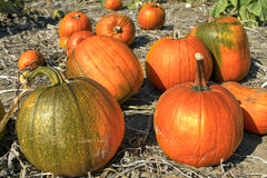 Pumpkin Patch 4 Stock Photo
