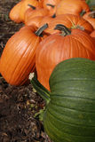 Pumpkin patch 4 royalty free stock photo
