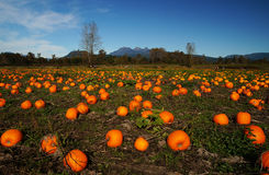 Free Pumpkin Patch Royalty Free Stock Images - 45250919