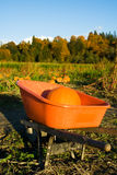 Pumpkin patch. A shot of a pumpkin in a wagon at the pumpkins patch Stock Images
