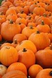 Pumpkin Patch. Full of pumpkins stock image