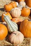 Pumpkin Patch Stock Image