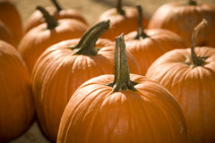 Pumpkin Patch 7 Royalty Free Stock Photo