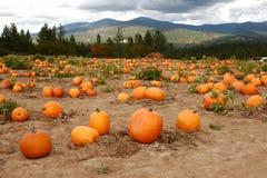 Pumpkin Patch Royalty Free Stock Photos