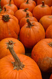 Pumpkin patch in the autumn Stock Image
