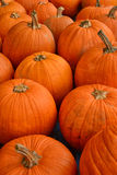 Pumpkin patch in the autumn Royalty Free Stock Photo