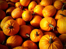 Pumpkin Patch background. With shadows and vignette royalty free stock photography