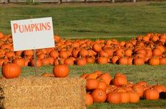 Pumpkin Patch with blank pumpkin sign Stock Photo